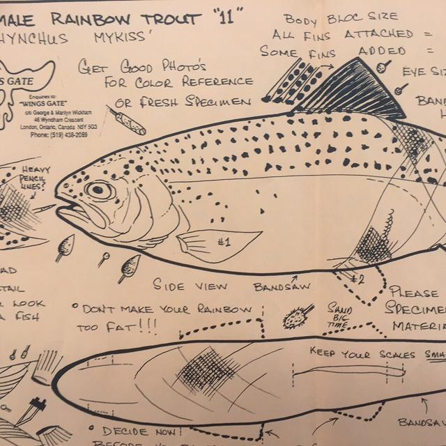 Rainbow trout female chippingaway
