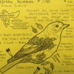 Song Bird Patterns
