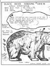 animals-1005B-blackbear