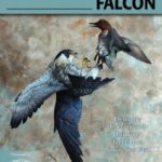 Peregrine Falcon Carving and Painting Instruction Book