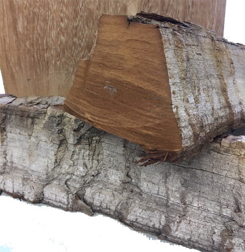 "Cottonwood Bark 4"" thick and 6"" wide"