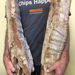 Large Cottonwood Bark