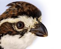 Bird Eye Chart